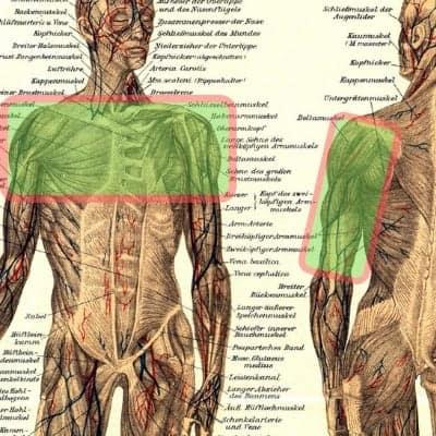 Klettern-Bouldern-ausgleichstraining-Brust-Schulter-Trizeps
