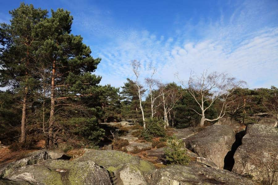 Fontainebleau Bouldern Frankreich